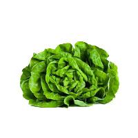 insalata-lattuga-trocadero