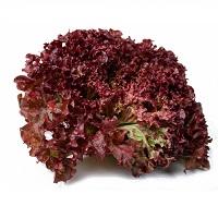 lollo-rosso-lettuce