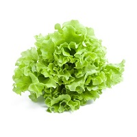 gentile-lettuce