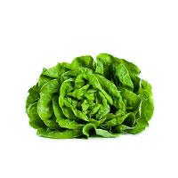 Trocadero-lettuce