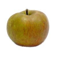 mele-renetta-canada